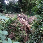 24/07/2013 Debris piled up by side of Dyke alongside footpath off Nottingham Road by Peter Bristow