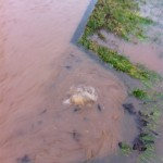 20/12/2012 Halam Road drain bubbling after I just unblocked the debris by Ben Huson