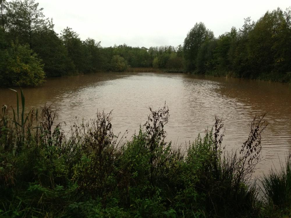 28/10/2013 - Starkey Pond