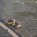 19/07/2014 Drain around Lower Kirklington Road / Leeway Road Junction